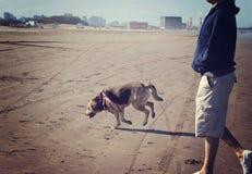 Hundspring med hans ägare fotografering för bildbyråer
