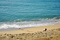Hundspring på den öde stranden Arkivfoton
