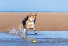 Hundspring på stranden arkivfoto