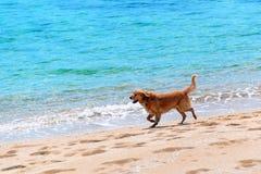 Hundspring på en strand Arkivbild