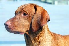 hundstående Royaltyfri Bild