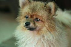 hundstående s Royaltyfri Fotografi