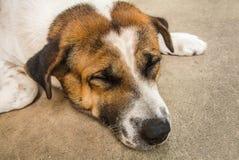 hundstående s Arkivfoton