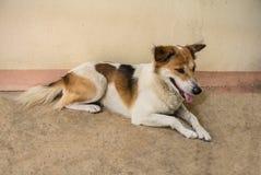 hundstående s Fotografering för Bildbyråer