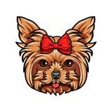 hundståendeterrier yorkshire böj red _ Yorkshire Terrier avel vektor Arkivbild