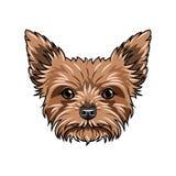 hundståendeterrier yorkshire Hundframsidan, huvud, tystar ned Yorkshire Terrier avel vektor Royaltyfri Bild