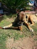 Hundstag Stockfotos