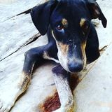 Hundstag stockfotografie