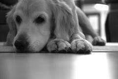 Hundstage Stockbilder