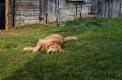 Hundstage des Sommers Stockfotos