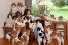 hundstapel Royaltyfri Bild