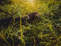 Hundtaxen går på en solig dag Arkivfoto