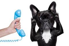 Hundtelefontelpehone Fotografering för Bildbyråer