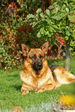 hundtrees under Arkivbilder
