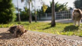 Hundtuggor tjalla till döds arkivbilder
