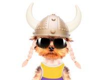 Hunduppklädd som en viking Royaltyfria Bilder