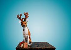 Hunduppklädd som julhjortar med gåva Arkivfoton