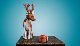 Hunduppklädd som julhjortar med gåva Arkivfoto