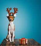 Hunduppklädd som julhjortar med gåva Royaltyfri Bild