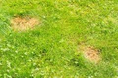 Hundurin skapar lappar på gräs Arkivbilder