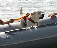 hundutbildning arkivbild