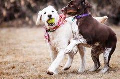Hundvänner Royaltyfri Fotografi