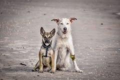Hundvänner på stranden arkivfoton