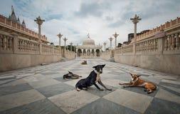 Hundvakter på tempelingången Royaltyfri Fotografi