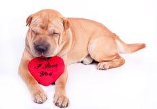 hundvalentin Fotografering för Bildbyråer
