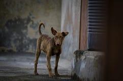 Hundvalpanseende som från sidan ser Arkivbild