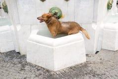 hundvatten Arkivfoton