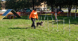 Hundvighetdemonstration Royaltyfri Fotografi