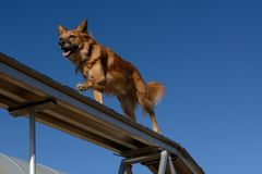 Hundvighethunden går Arkivbilder