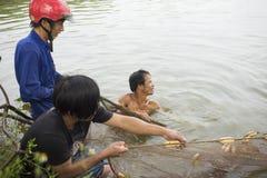 Hung Yen,越南- 2015年7月26日:收获从池塘的农夫鱼在Hung Yen 免版税库存图片