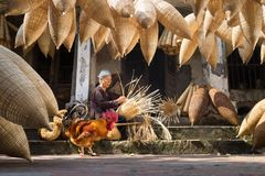 Hung Yen, Vietnam - July 9, 2016: Old house yard with many bamboo fish trap, a cock, and female craftsman making traditional bambo. O fish trap at her old house Stock Photography