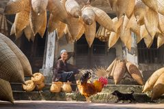 Hung Yen, Vietnam - July 9, 2016: Old house yard with many bamboo fish trap, a cock, and female craftsman making traditional bambo. O fish trap at her old house Stock Photos