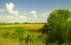 Hungarian countryside - blue sky with some clouds, tree and weedy field stock photography