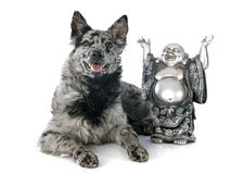 Hungarian dog and bouddha Royalty Free Stock Photography