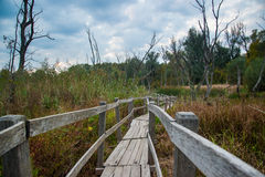 Hungarian Marshes Royalty Free Stock Photos