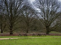 Free Hungarian Oak Trees In A Yorkshire Park, England, With Wooden Picnic Tables Stock Photography - 167211002