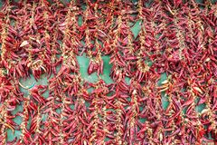 Hungarian paprika garlands drying in the sun in Budapest Hungary. Hungarian paprika garlands drying in the sun in Budapest, Hungary royalty free stock images