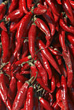 Hungarian red hot pepper. Red hot pepper royalty free stock image