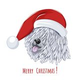 Hungarian sheepdog wears Christmas hat. Royalty Free Stock Image