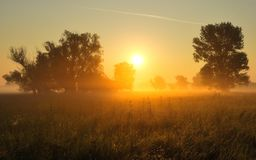 Sunrise on the grassland with trees Stock Photos