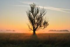 Sunrise on grassland / single tree at morning Stock Image