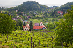 Hungarian vineyard at Balaton lake Royalty Free Stock Photos