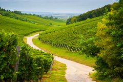 Hungarian vineyards Royalty Free Stock Photo