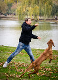 Hungarian Vizsla dog playing fetch in the park Stock Image