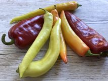 Yellow and red spicy chili peppers stock images