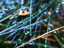 Drops on the grass stock images